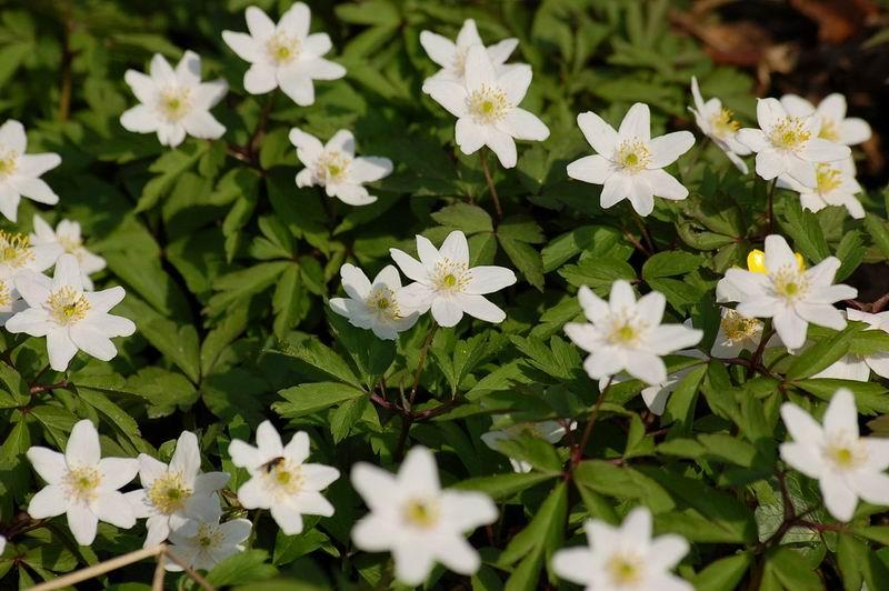 самые первые цветы весны
