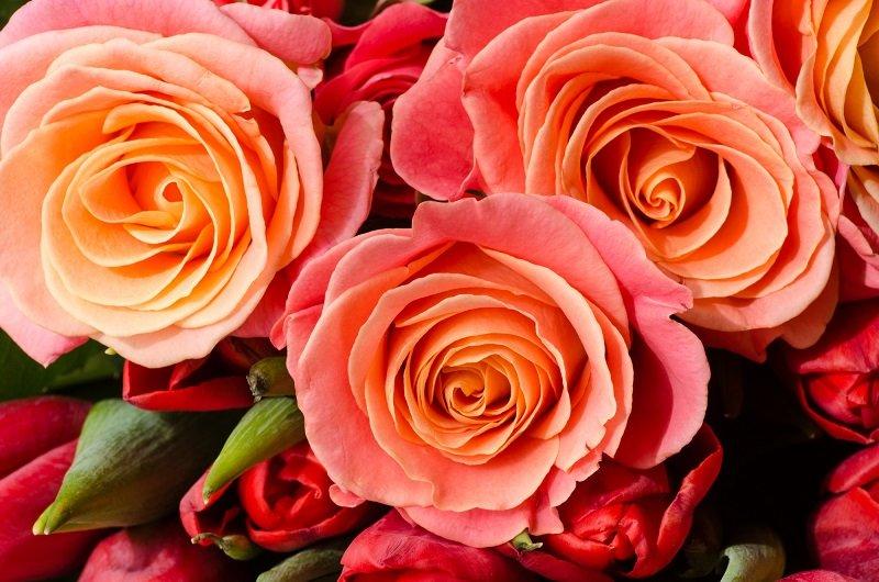 пирог чайная роза