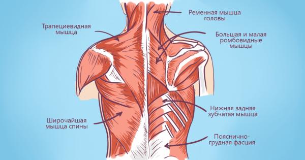 Проблемы со спиной — свидетельство отсутствия точки опоры в жизни! Вот что можно сделать…
