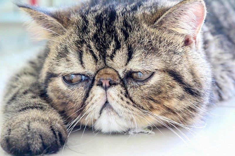 самый хмурый кот