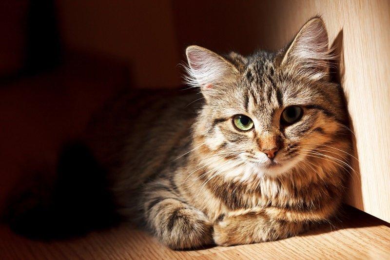 кошка в доме энергетика