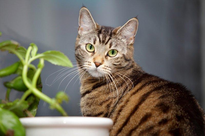 кошка в доме к счастью