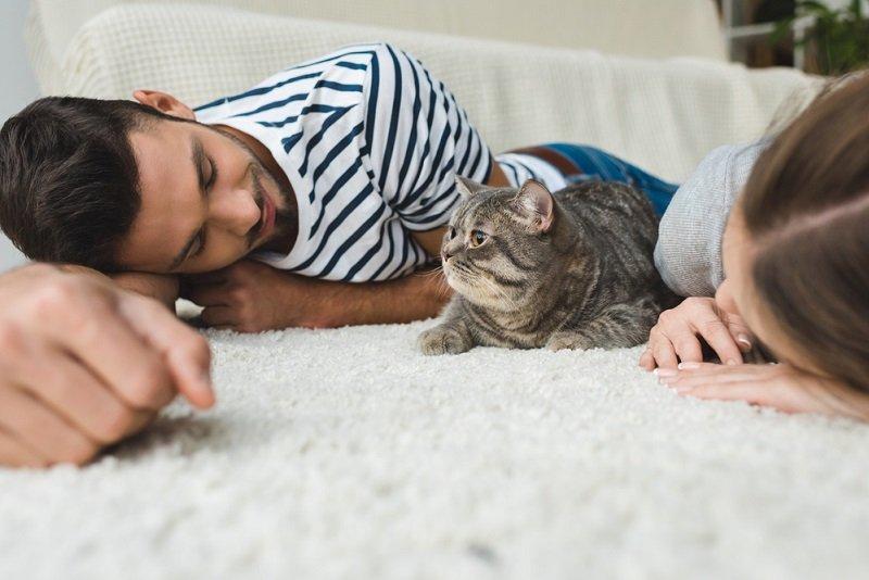 кошка в доме польза и вред
