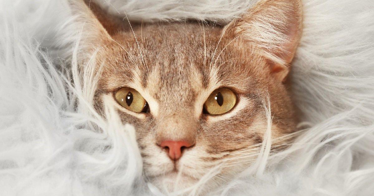 Почему любят кошек
