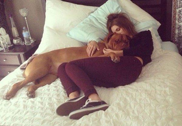 pes je lepší ako človek