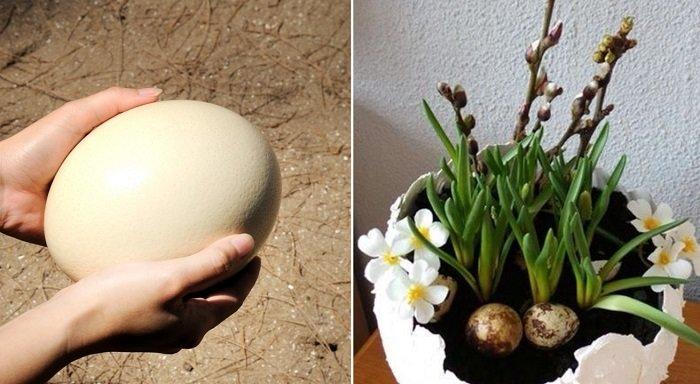 поделки и мозаика из яичной скорлупы