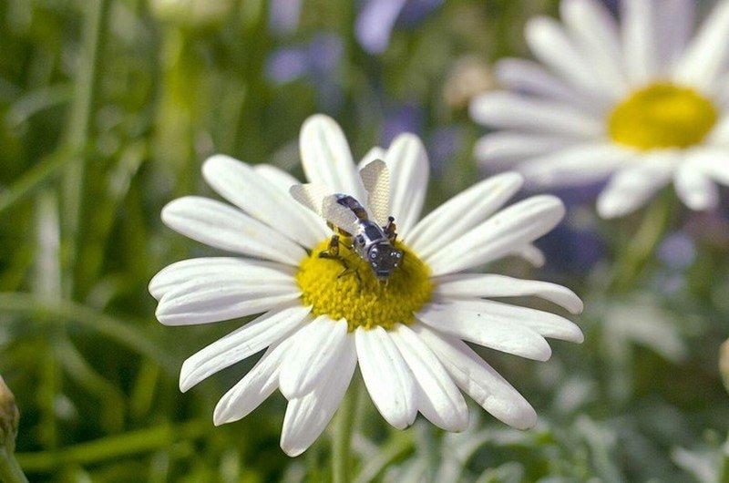 вымирание пчел грозит гибелью человечеству