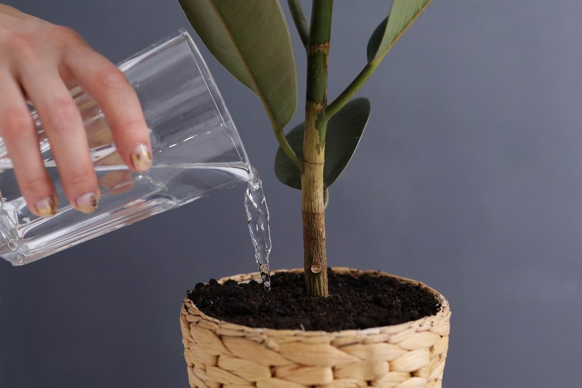 «Бульонный» способ подкормки растений, после которого они растут с новой силой