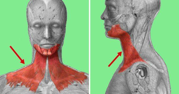Я шокирована! Морщины и плохое самочувствие появляются из-за дряблости подкожной мышцы шеи.