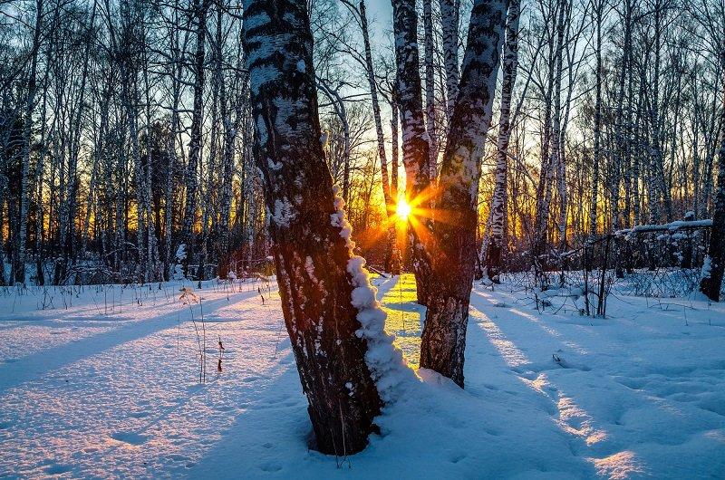 прогноз погоды на зиму 2019-2020 в россии