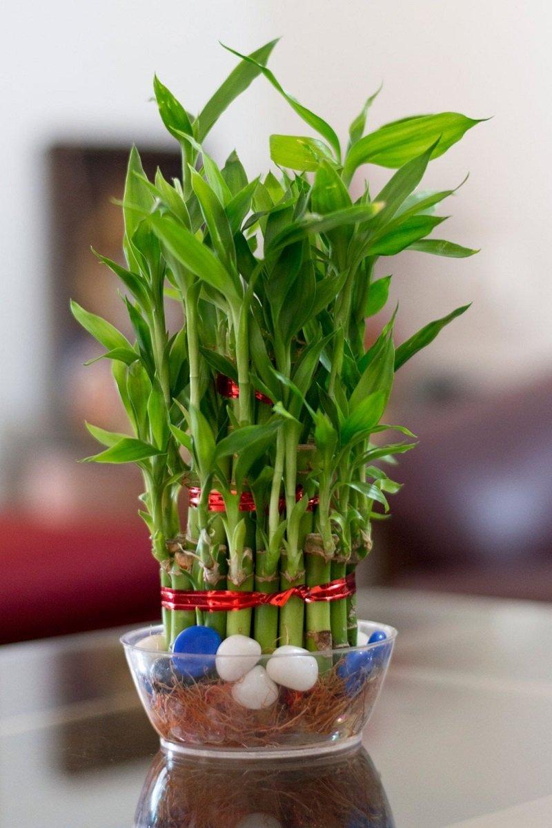 домашние растения с положительной энергетикой