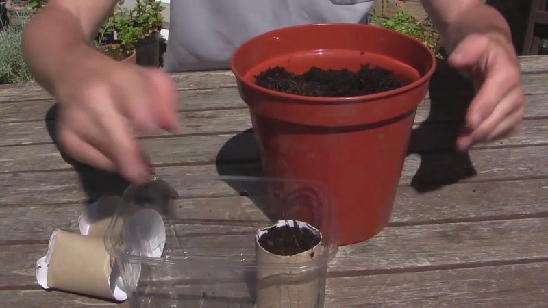 как обезопасить семена