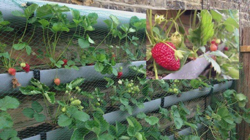 Новости PRO Ремонт - 10 практичных советов для садоводов. Кажется, № 4 решит твою главную проблему…