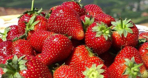 Прекрасное летнее угощение: 7 полезных свойств клубники для здоровья и красоты.