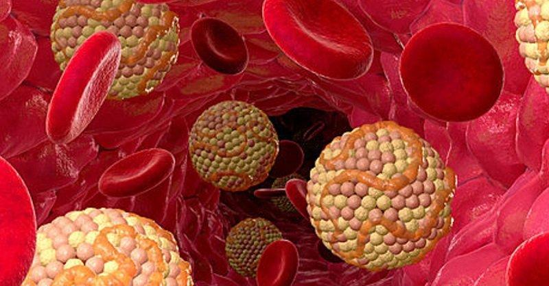 нормы уровня холестерина в крови