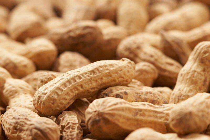 Польза орехов для человека