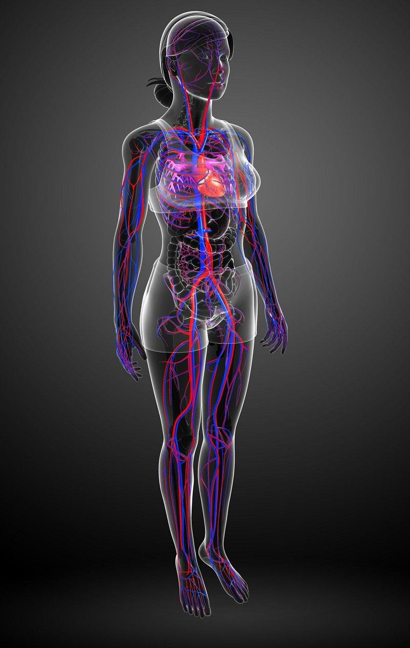 Как научиться приседать с пользой для здоровья Здоровье,Ноги,Сердце,Спорт,Упражнения