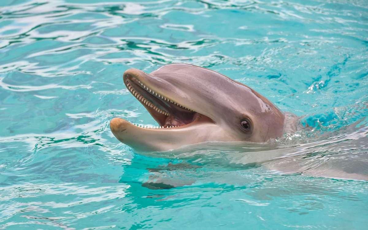Почему дельфины не построили свою цивилизацию, ведь они такие умные Советы,Вода,Животные,Море,Отдых,Релаксация