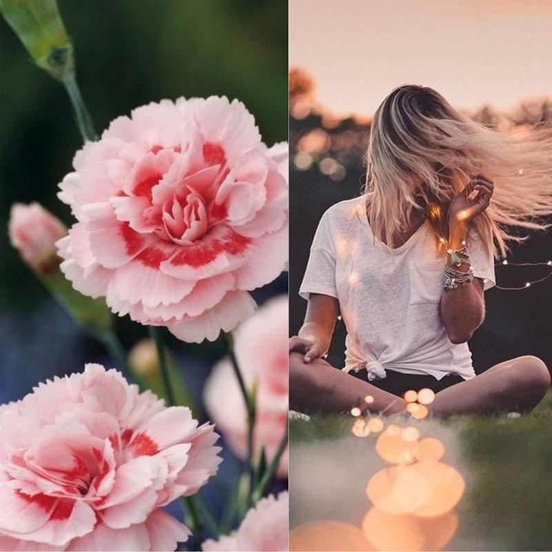 Светлана цветок имени