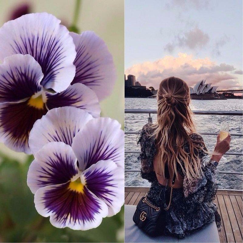 Анна цветок