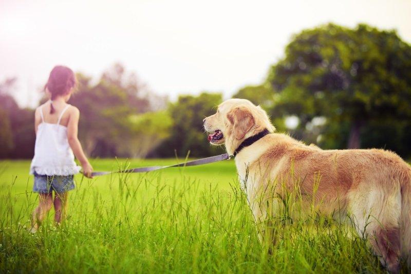 породы собак для детей аллергиков