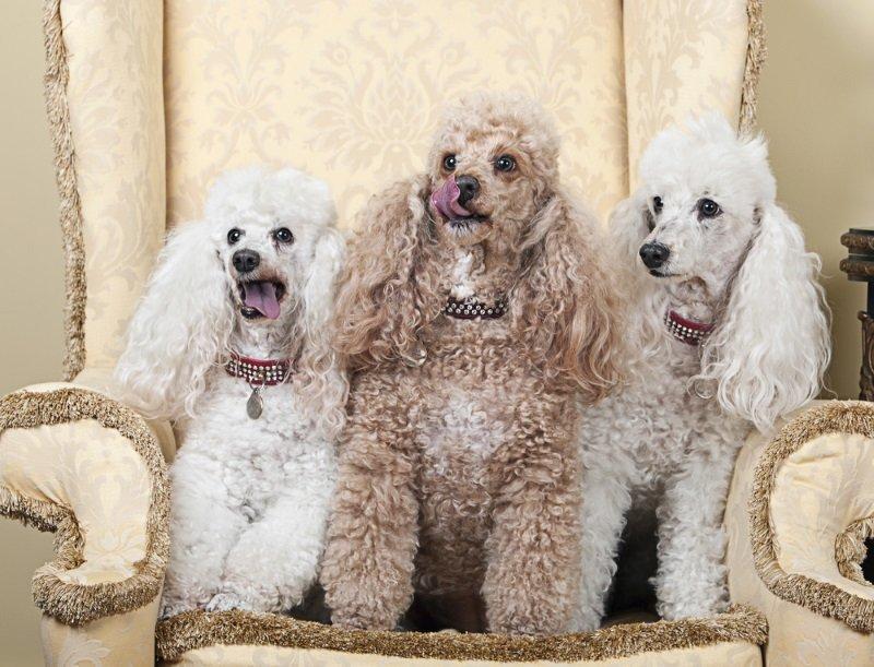 добрые породы собак для детей