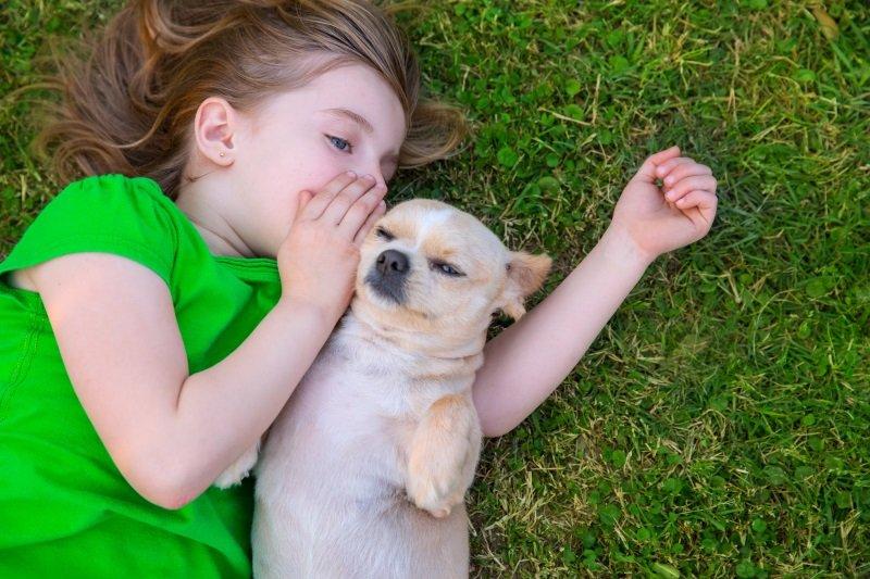 породы собак для детей с фото
