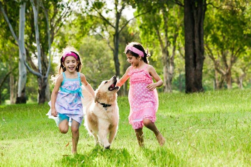 породы собак для детей в квартире