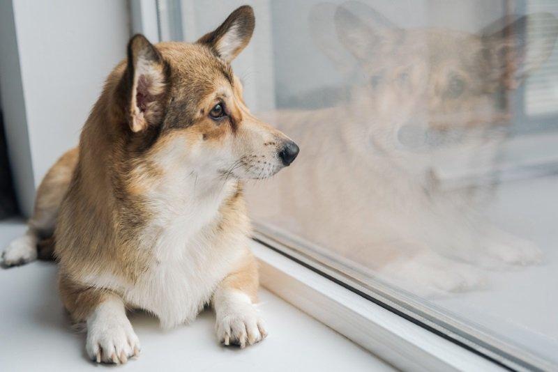 породы собак для детей фото