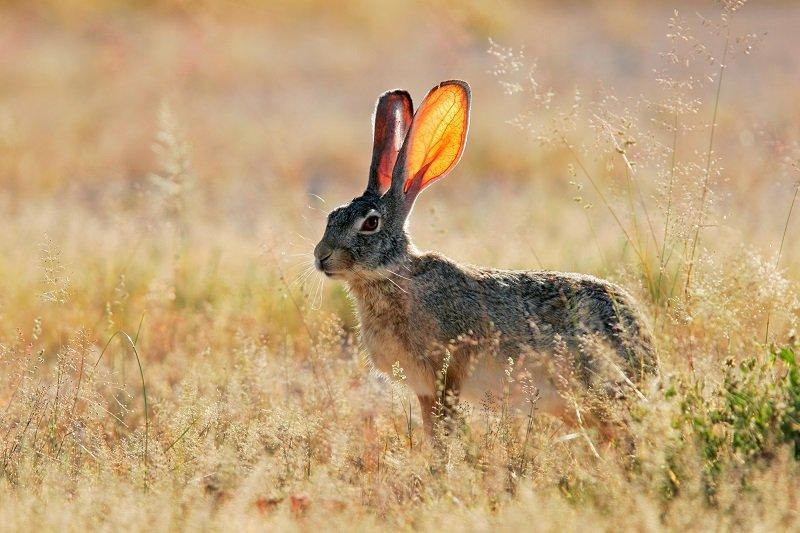 Как упростить изучение английского языка предложения, кролики, rabbit, именно, кролик, бегали, равно, двигался, понятно, предложении, slowly, moving, можно, месте, dream, поможет, нужно, предложение, времени, глаголом