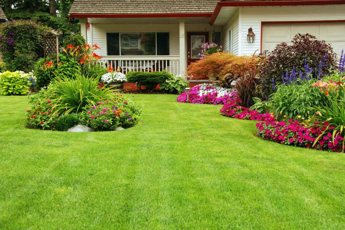 Что посеять у дома вместо обычной газонной травы