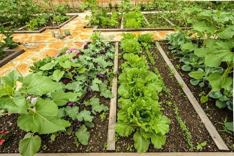 pestovanie zeleniny v apríli
