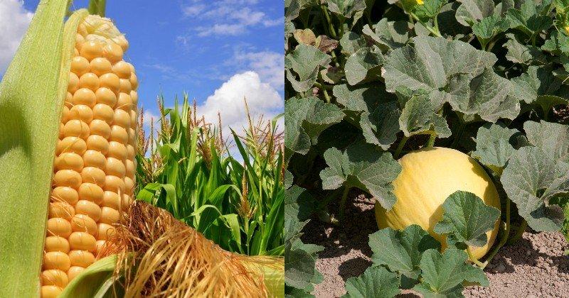 kombinované vysádzanie zeleniny a kvetov