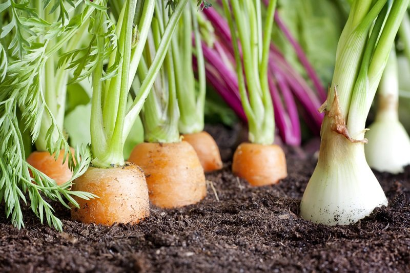 vysádzanie zeleniny vo fázach mesiaca