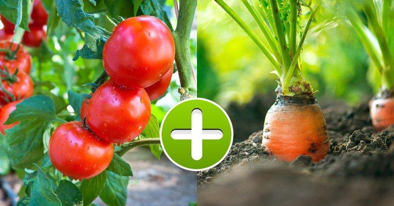 výsadba zeleniny na jar