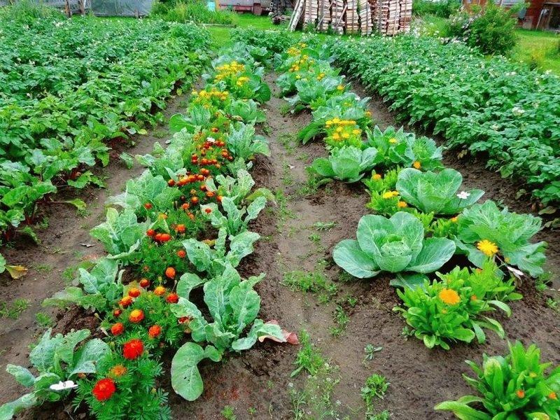 pestovanie zeleniny v marci