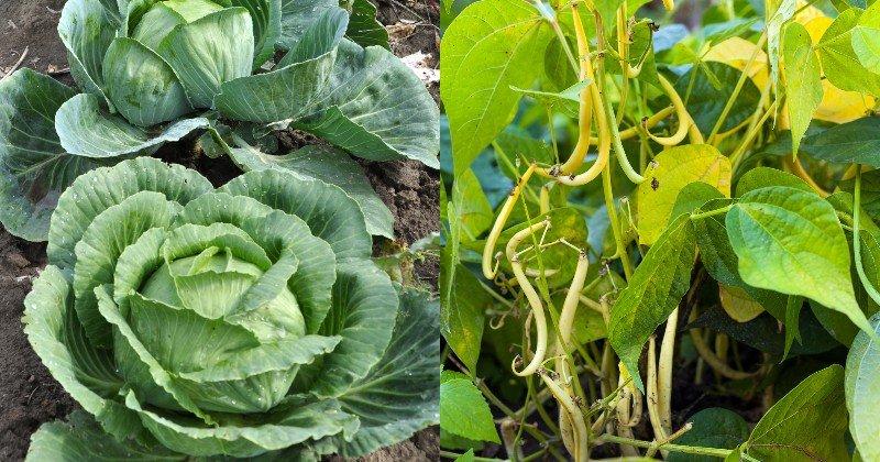 spoločné výsadby zeleniny a kvetov