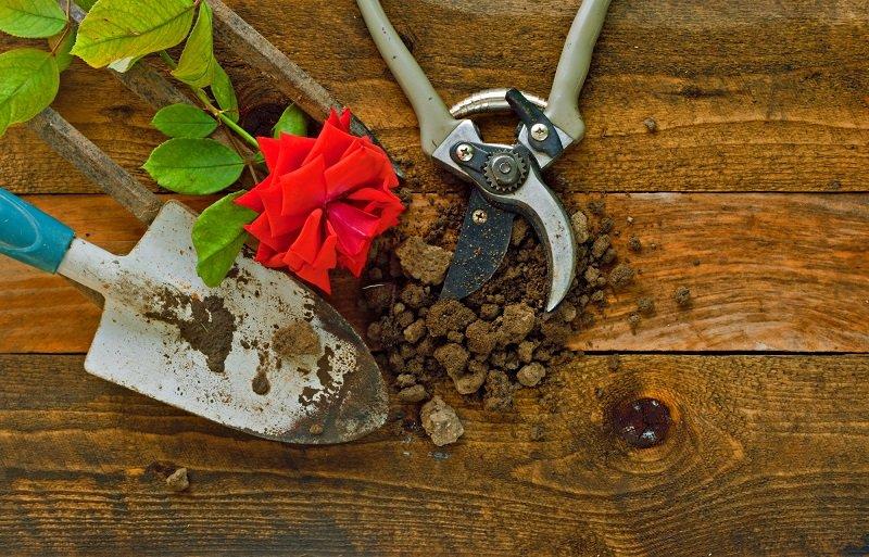 Как правильно высаживать розы осенью Вдохновение,Советы,Розы,Сад,Садоводство,Цветы