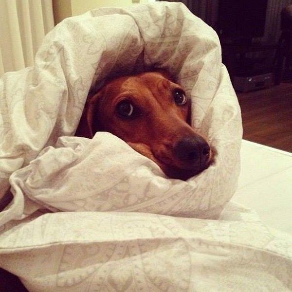 жалобный взгляд собаки