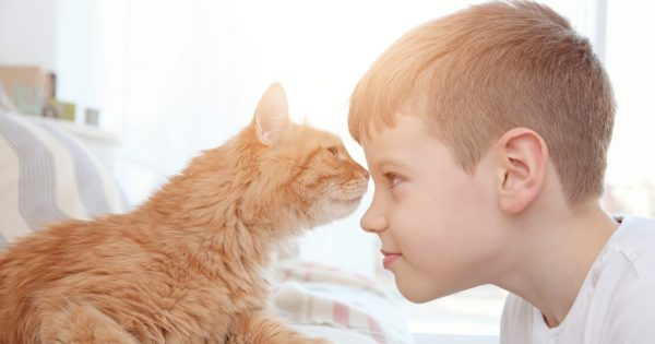 Little boy with cute cat at home