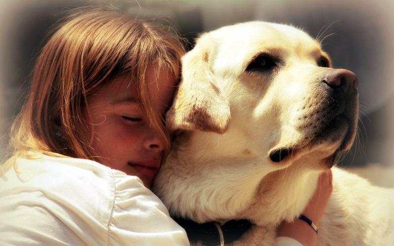 поведение собаки