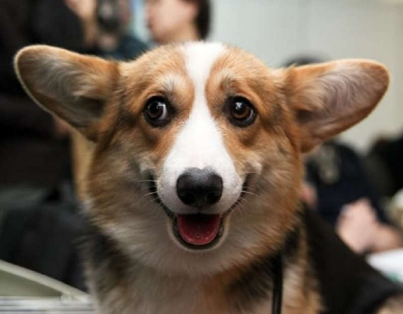 поведение собаки дома
