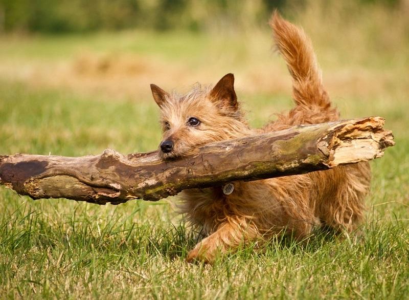 hodnota správania psov