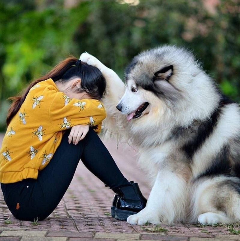 správanie psov s ľuďmi