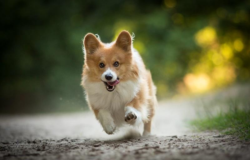 поведение собаки на улице