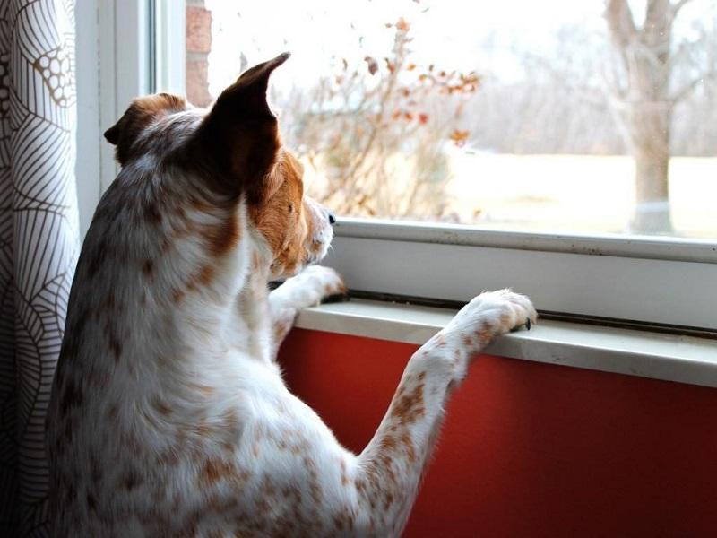 správanie psov v rodine