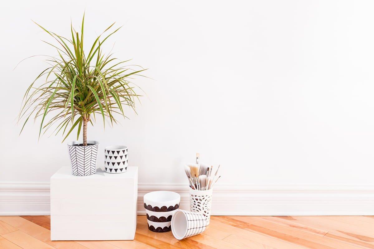 комнатные растения примеры