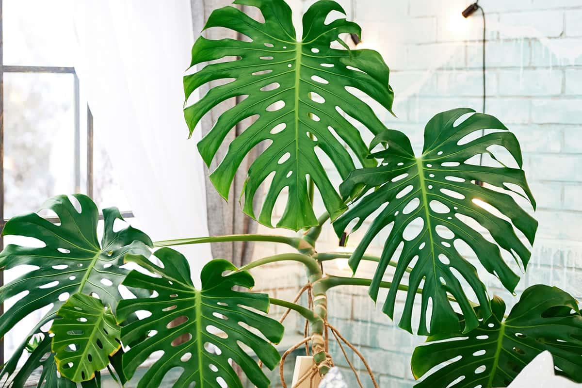 комнатные растения можно