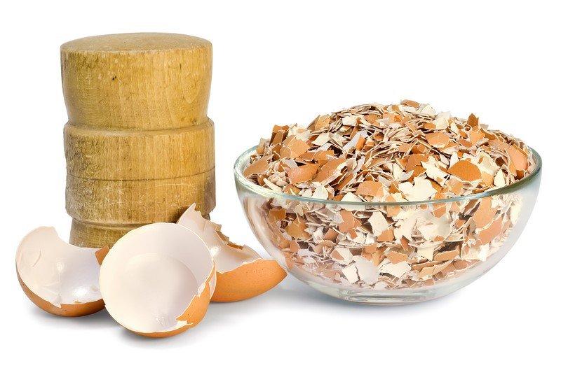яичная скорлупа в пищу
