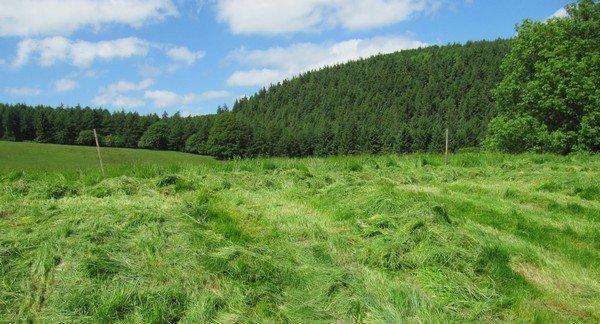 трава у леса